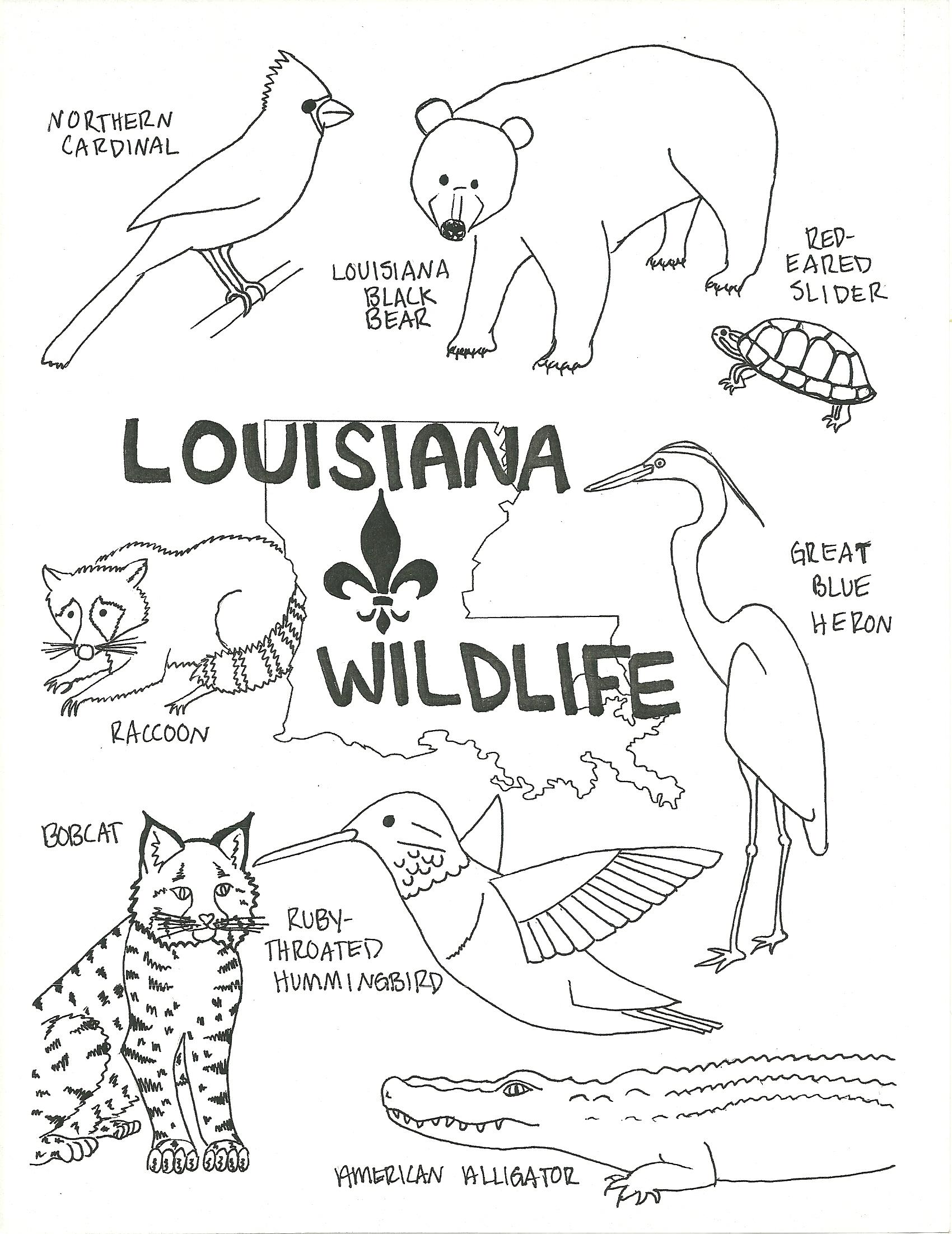 Louisiana symbols coloring pages coloring pages for Louisiana state symbols coloring pages